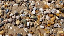 Different Sea Stones And Seashells On The Wet Beach Sand Royalty Free Stock Photography