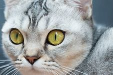 Free Close View Of A Cat S Face Royalty Free Stock Photography - 117112297