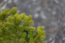 Free Green Lead Tree Stock Image - 117112321