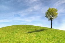 Free Green Tree On Green Grass Field Under White Clouds And Blue Sky Stock Photography - 117112352