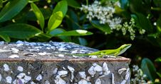 Free Green Lizard On Top Of Gray Surface Stock Photo - 117112390