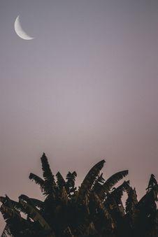 Free Moon And Banana Tress Royalty Free Stock Photography - 117112447