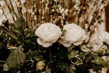 Free Selective Focus Photography Of Two White Petaled Flowers Stock Photography - 117112522