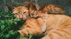 Free Orange Tabby Cat And Kitten Royalty Free Stock Image - 117112616