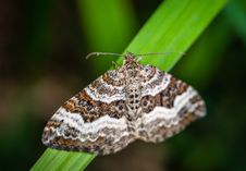 Free Selective Focus Photography Of Gray, Brown, And Black Striped Butterfly Perched On Green Leaf Stock Images - 117112654
