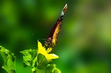 Free Brown Butterfly Perched On Green Leaf Plant In Closeup Photography Stock Images - 117112834