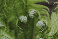 Free Close-up Photography Of Green Fern Plant Stock Images - 117112904