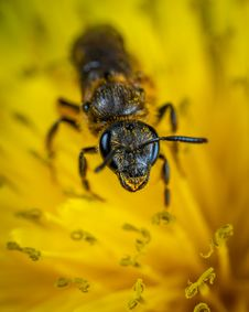 Free Black Ant On Yellow Petaled Flower Royalty Free Stock Photos - 117113008