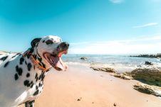 Free Photography Of A Dog On Seashore Royalty Free Stock Photos - 117113028