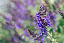 Free Selective Focus Photography Purple Petal Flower Plant Stock Photos - 117113033