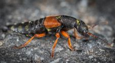 Free Black And Orange Beetle On Grey Surface Royalty Free Stock Photography - 117113077