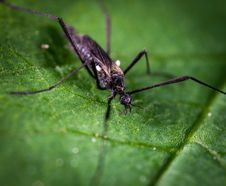 Free Black And Brown Crawling Insect On Green Leaf Stock Photos - 117113083