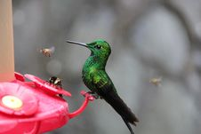 Free Photo Of Green And Black Hummingbird Perched On Red Branch Stock Photography - 117200412