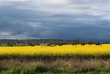 Free Photography Of Flower Field Under Cloudy Sky Stock Photography - 117280652