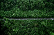 Free Bird S-eye View Photo Of Road With Trees Stock Images - 117280664