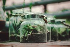 Free Clear Glass Terrarium Royalty Free Stock Photo - 117280675