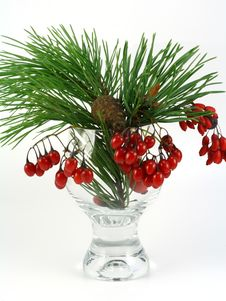 Free Branch Of A Pine And Red Berries Royalty Free Stock Image - 11734586