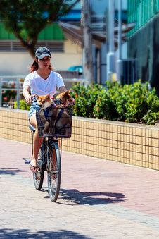 Free Woman Riding Bicycle With Dog In Basket Stock Photography - 117352462
