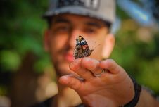 Free Brown And Black Butterfly On Man S Hand Royalty Free Stock Photos - 117352468