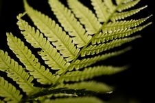 Free Selective Focus Photo Of Linear Leaf Plant Stock Photography - 117352502
