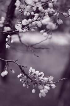 Free Grayscale Photo Of Flowers In Tree Stock Image - 117352631