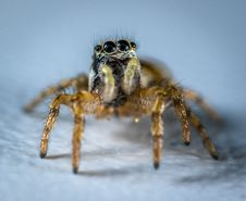 Free Spider Macro Photography Royalty Free Stock Images - 117352699