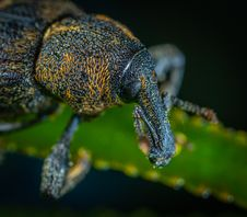 Free Macro Photography Of Black And Yellow Beetle Royalty Free Stock Image - 117352736