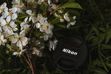 Free Black Nikon Dslr Camera Lens Cover Near White Petaled Flowers Stock Images - 117352754