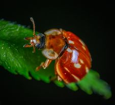 Free Bug In Close-up Photography Stock Images - 117352784