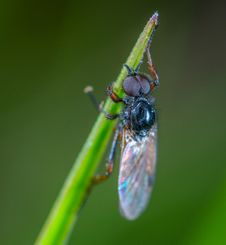 Free Black Fly Close-up Photography Royalty Free Stock Photography - 117352787