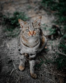 Free Selective Focus Photography Of Brown Tabby Cat Royalty Free Stock Images - 117352899
