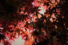 Free Photo Of Leafy Tree Stock Photo - 117420890