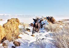 Free Black Dog Running On Snow Covered Field Stock Image - 117420901