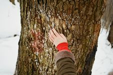 Free Person Holding Brown Tree Bark At Daytime Royalty Free Stock Photography - 117420947