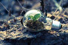 Free Clear Light Bulb Planter On Gray Rock Royalty Free Stock Photos - 117420948