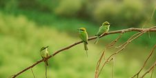 Free Three Long-beaked Small Birds Perched On Brown Tree Branch Royalty Free Stock Images - 117421019