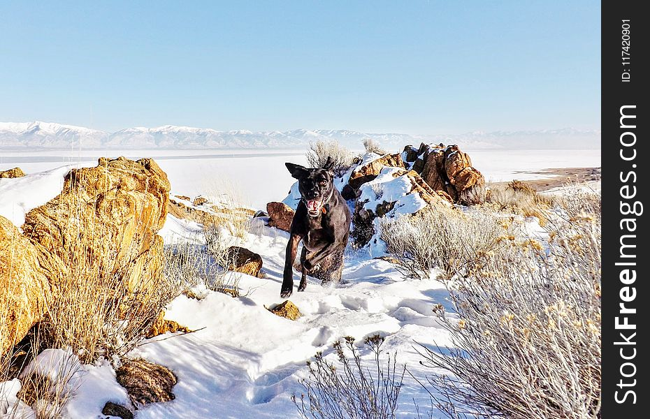 Black Dog Running on Snow Covered Field