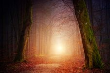 Free Foggy Path Royalty Free Stock Photography - 117486137
