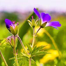 Free Selective Focus Photo Of Purple Petaled Flowers Stock Photos - 117486163
