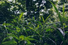 Free Selective Focus Photo Of Green Grass Field Under Green Trees Royalty Free Stock Photo - 117486225