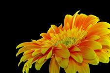 Free Close-up Photography Yellow Gerbera Daisy Flower Stock Photo - 117486260