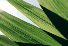 Free Close-Up Photo Of Green Leaves Royalty Free Stock Image - 117486316