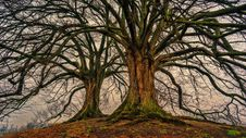 Free Two Bare Trees Stock Images - 117536874
