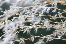 Free Shallow Focus Photography Of Dandelion Flower Royalty Free Stock Photo - 117536895