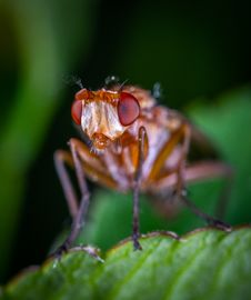 Free Macro Photography Of Brown Fly On Green Leaf Stock Images - 117536924