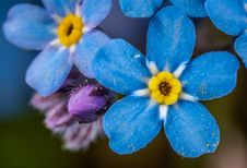 Free Selective Focus Photography Of Blue And Yellow Flowers Stock Photography - 117536932
