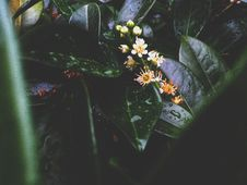 Free Shallow Focus Photography Of Plants Stock Images - 117608394