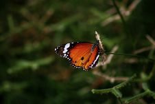 Free Close-up Photography Of Butterfly Royalty Free Stock Images - 117608409