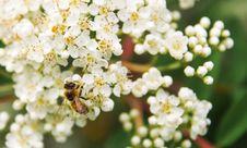 Free Tilt Shift Lens Photography Of Bee On White Flower Stock Image - 117608601