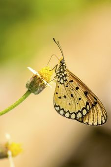 Free Close-up Photography Of Butterfly Stock Photo - 117689080